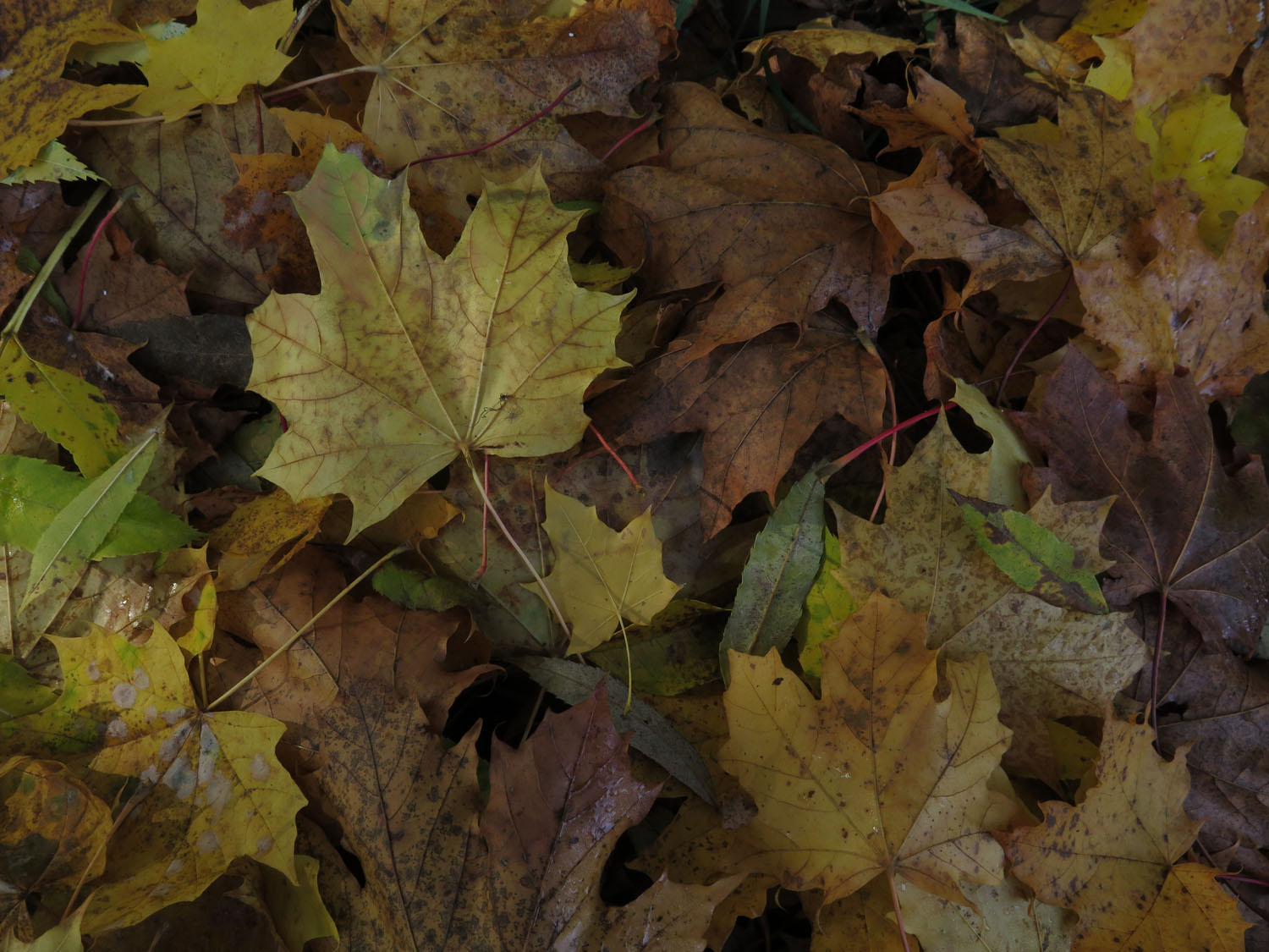 Germany-Rhine-River-Valley-Fallen-Leaves