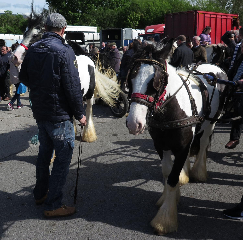 Ireland-Animals-Milltown-Horse-Market