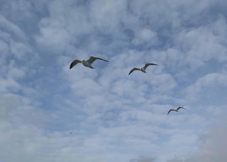 Finland-Helsinki-Suomenlinna-Ferry-Seagulls