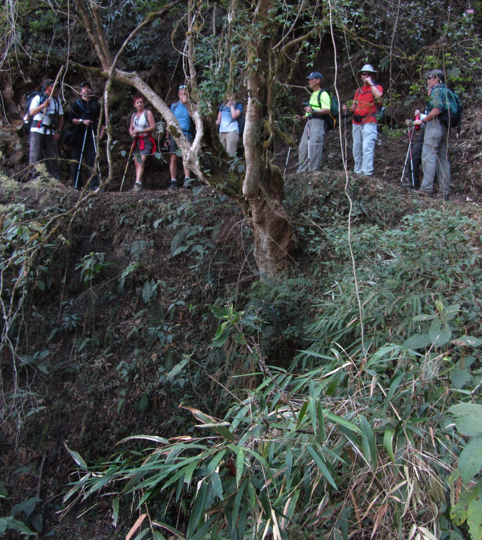 Peru-Salkantay-Trek-Day6-Forest