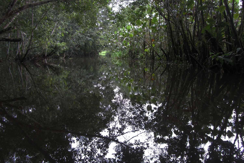 Amazon-Water