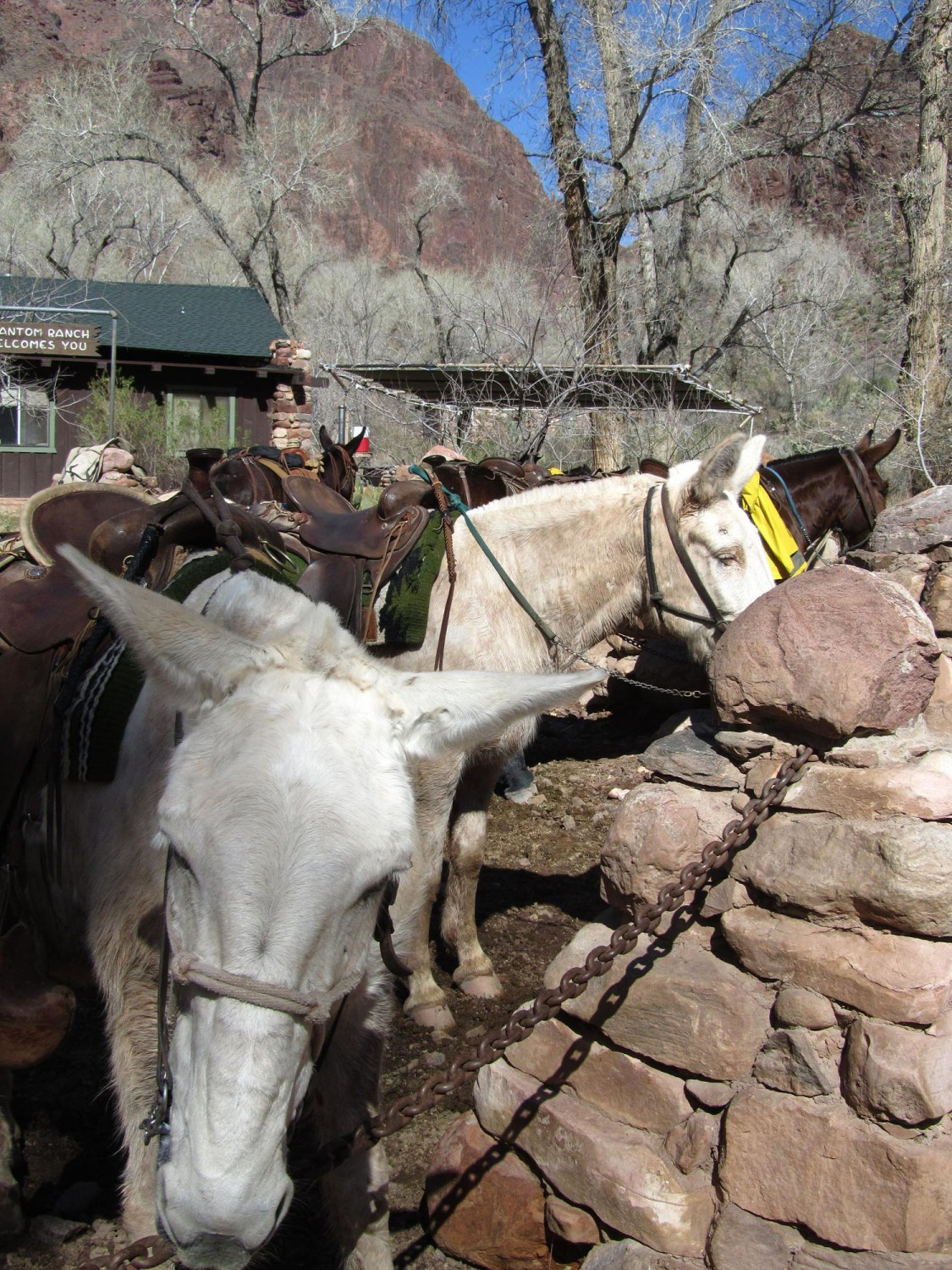 Grand-Canyon-Phantom-Ranch-Corral