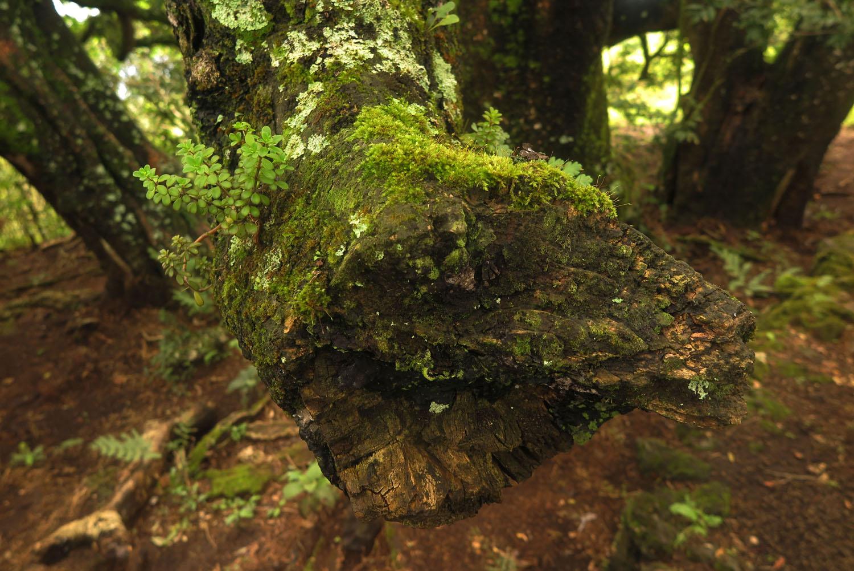 Ecuador-Galapagos-Flora-Stump