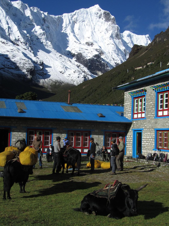 Nepal-Everest-Region-Trek-Day-07-Thame-Yaks