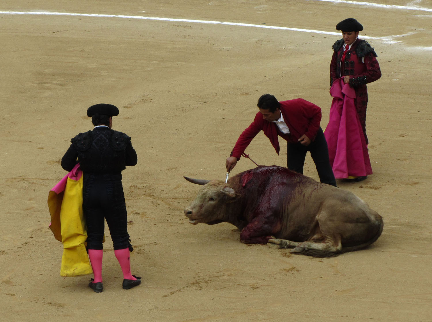 Ecuador-Quito-Bullfight-Brain-Stem