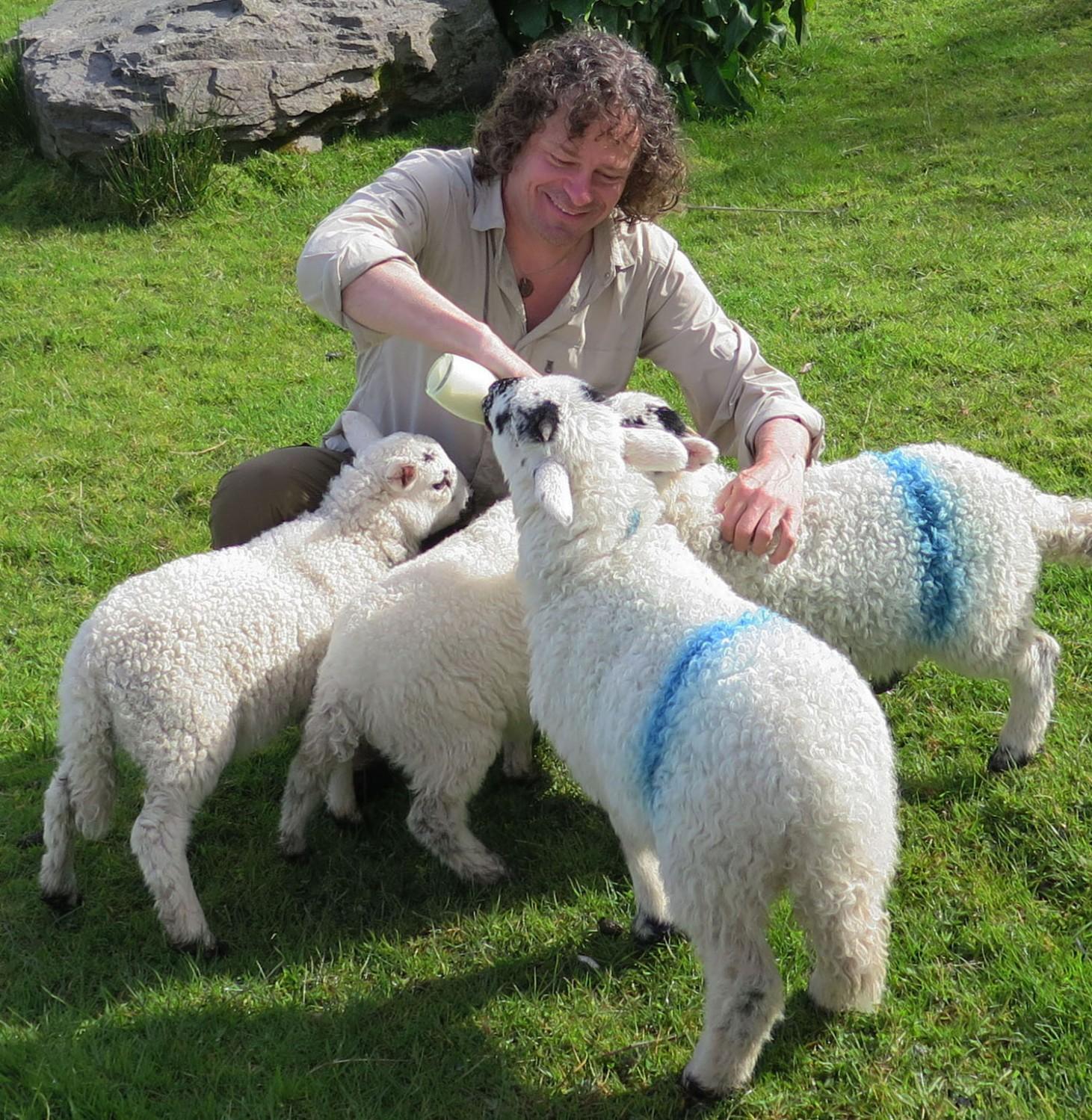 Ireland-Animals-Lambs-Taobh-Coille
