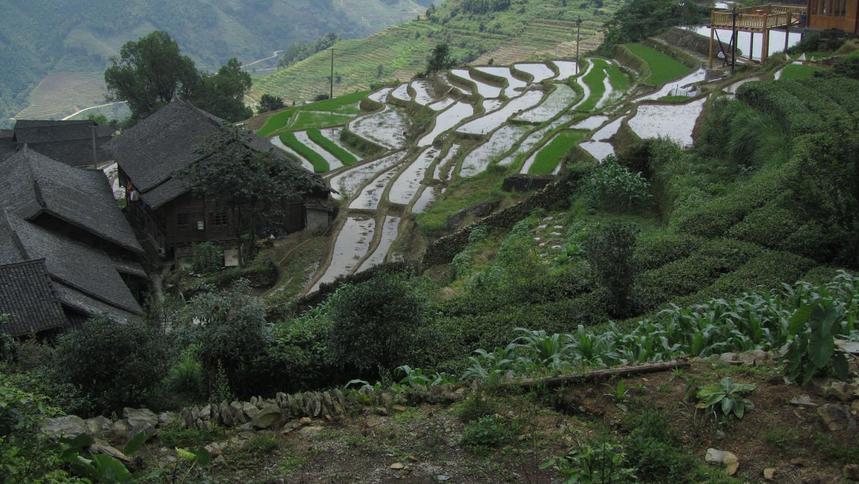 China-Longji-Rice-Terraces