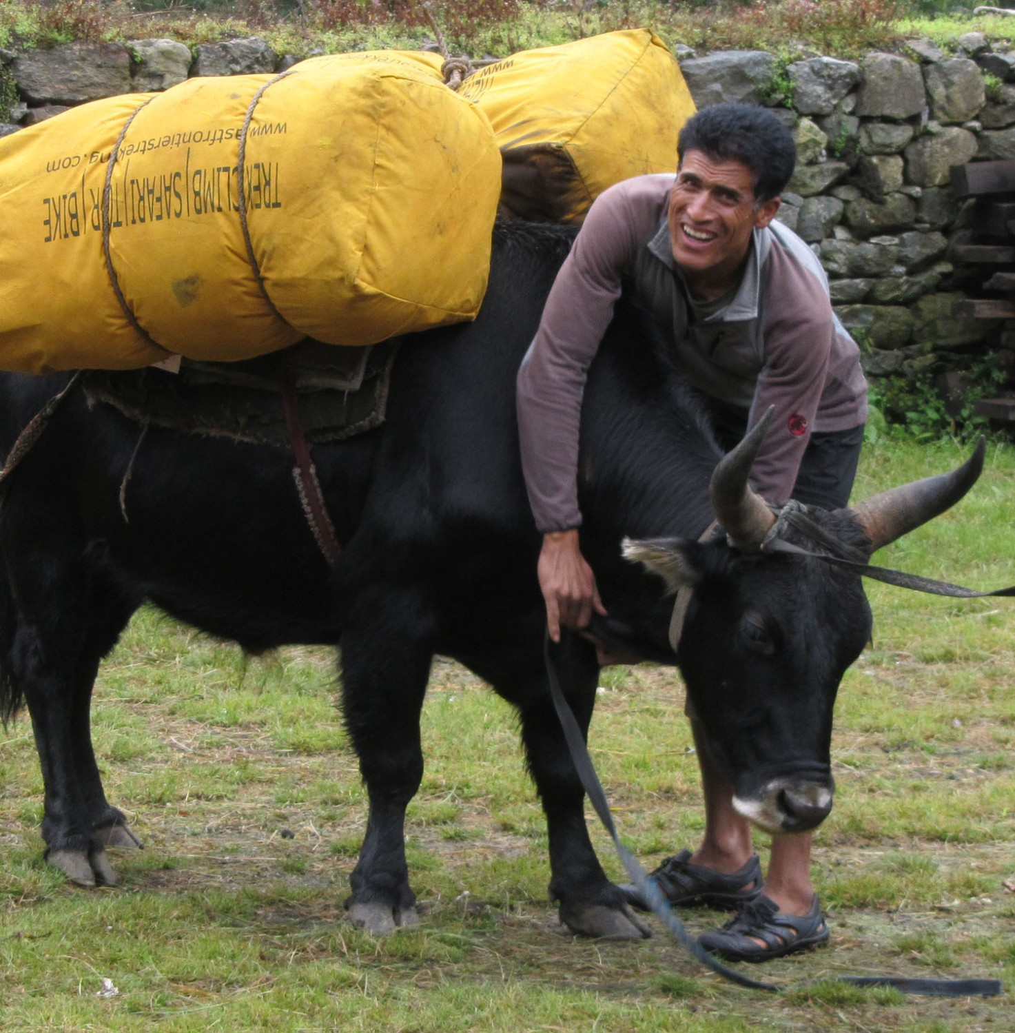 Nepal-Everest-Region-Trek-Day-02-Yak-Boss