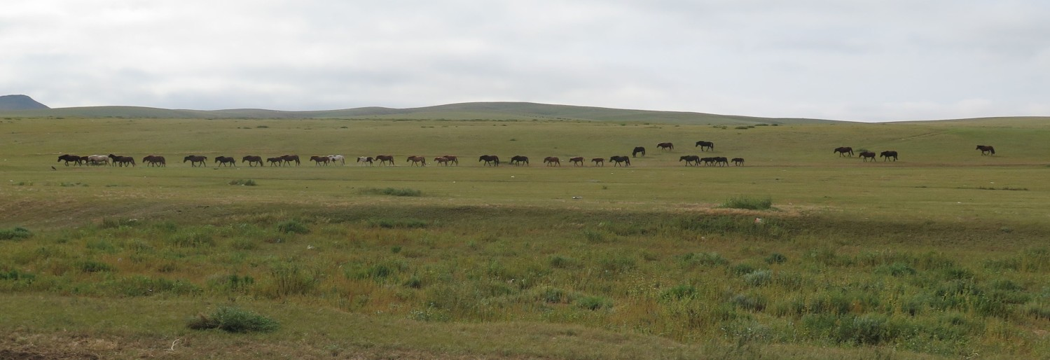 Mongolia-On-The-Road-Horses
