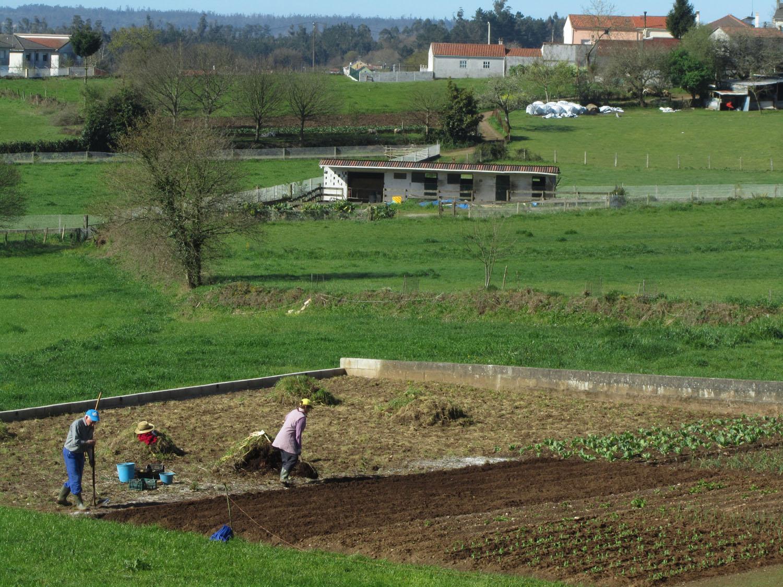 Camino-De-Santiago-Sights-And-Scenery-Farm