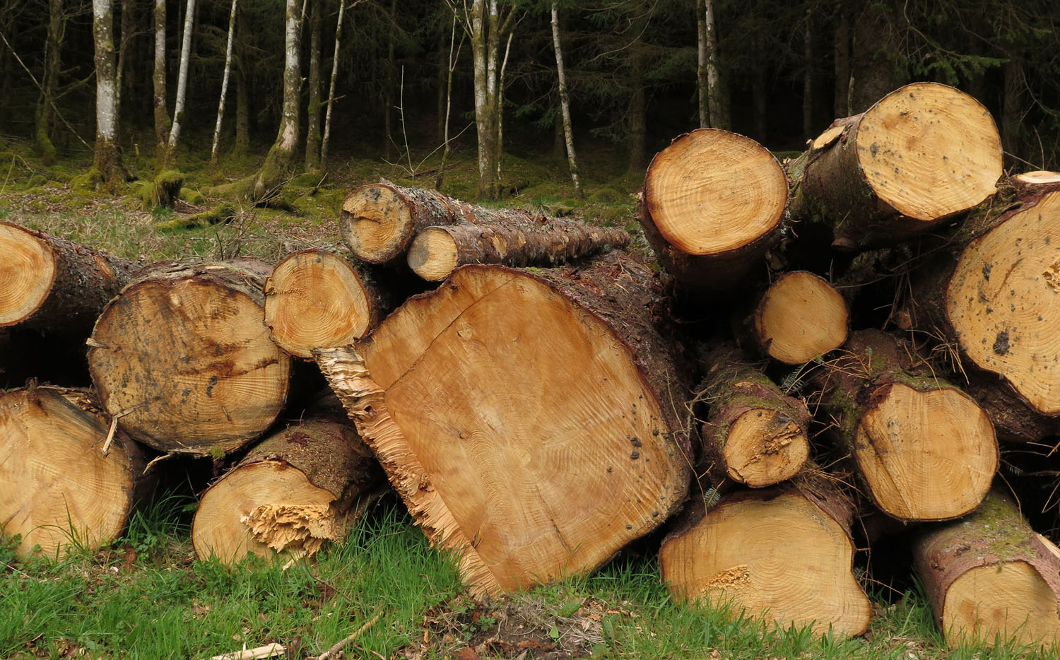 Scotland-Highlands-Timber