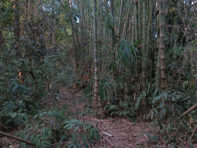 Vietnam-Cu-Chi-Tunnels-Jungle