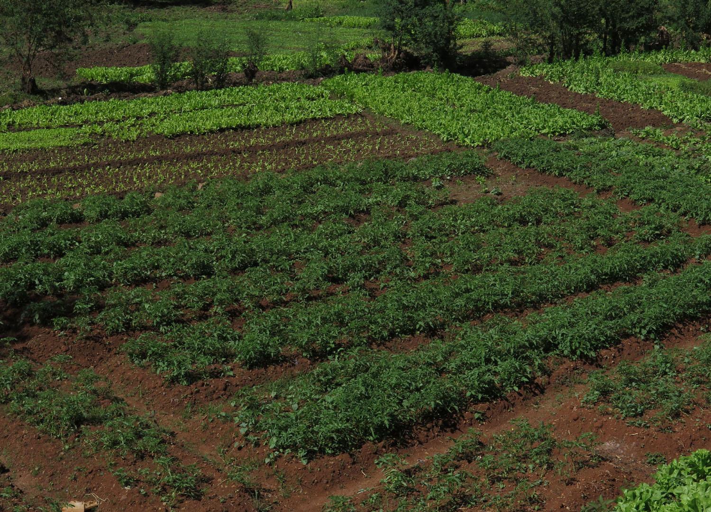 Ethiopia-Bahir-Dar-Garden