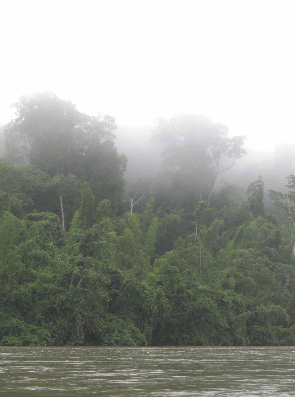 Amazon-Rain