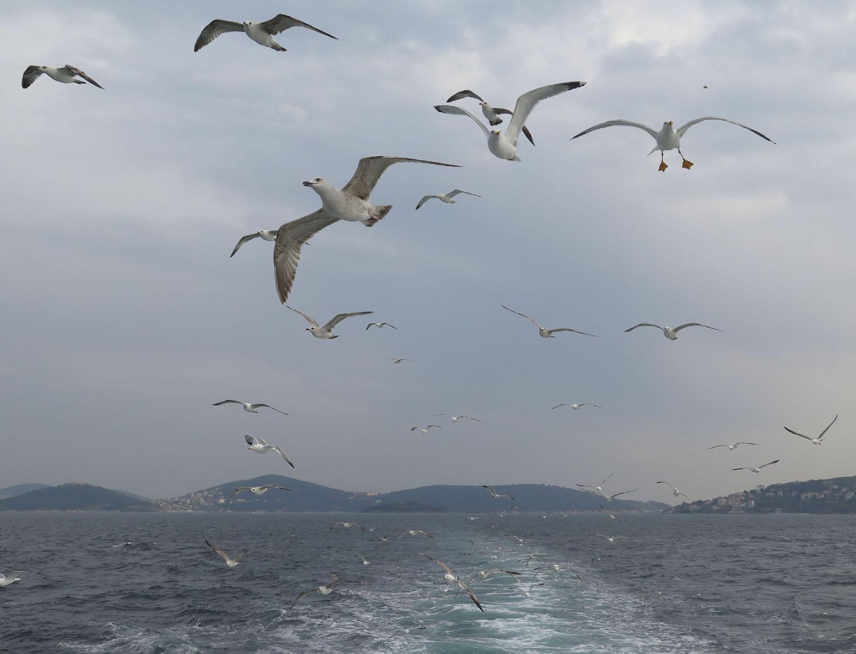 Turkey-Bosphorus-Seagulls