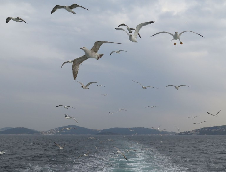 Turkey-Bosphorus-Seagulls