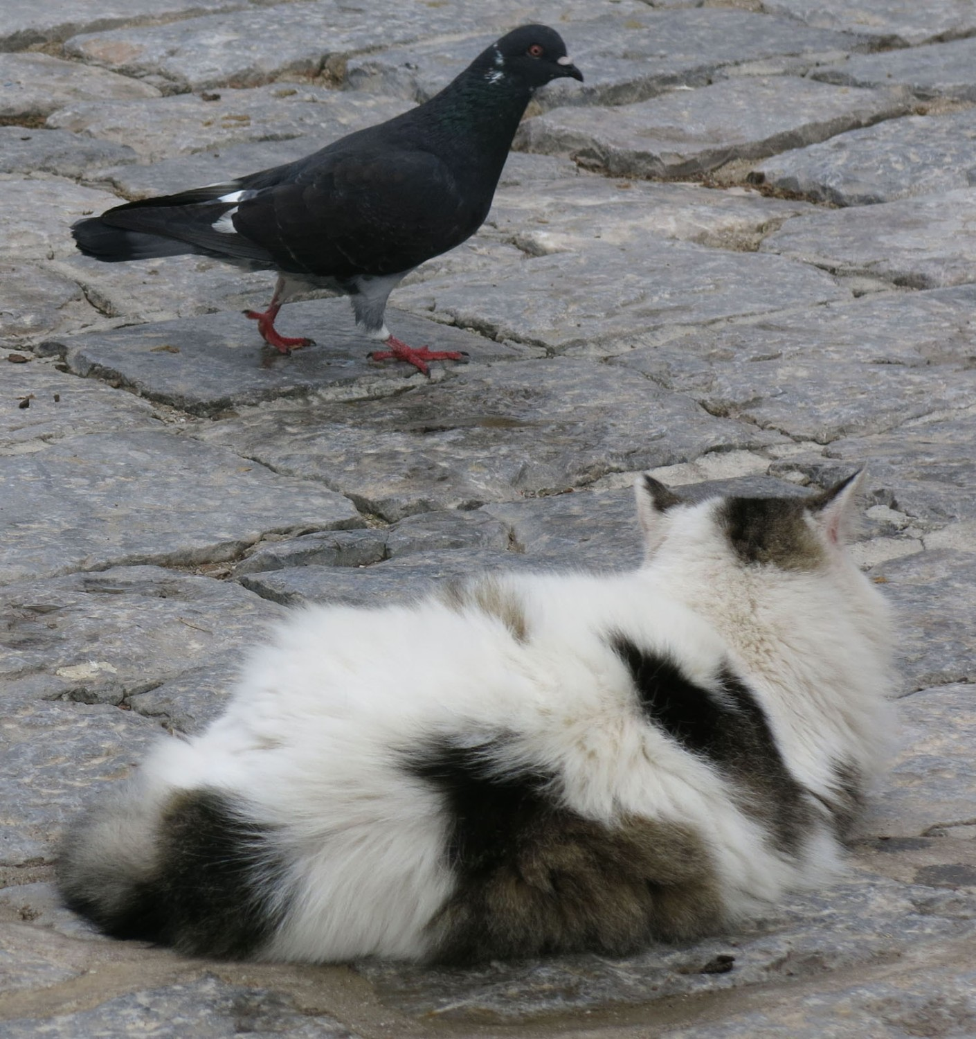 Greece-Hydra-Cats