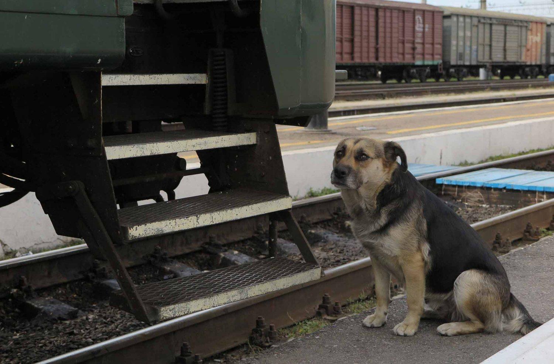 Russia-Trans-Siberian-Railway-Hungry-Doggie