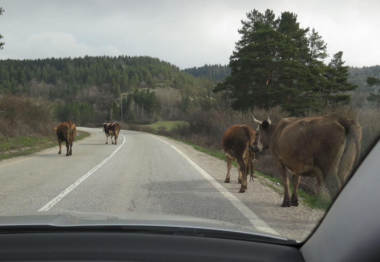 Bosnia-Srebernica-Horses