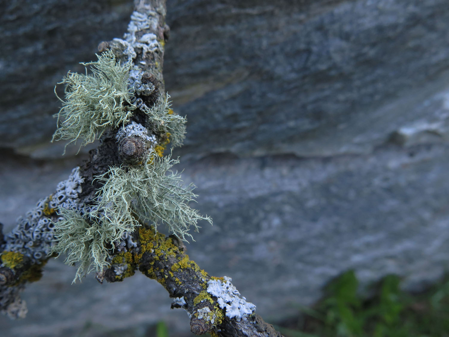 Switzerland-Zermatt-Foothills-Lichen
