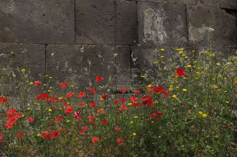 Italy-Pompeii-Flowers