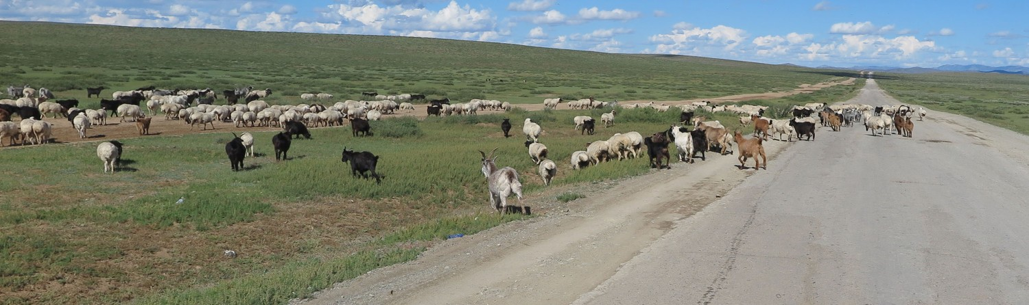 Mongolia-On-The-Road-Goats