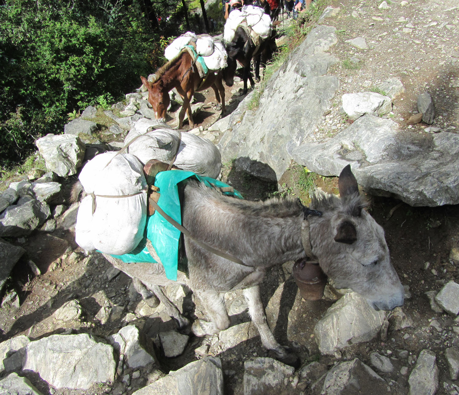 Nepal-Everest-Region-Trek-Day-07-Beasts-Of-Burden