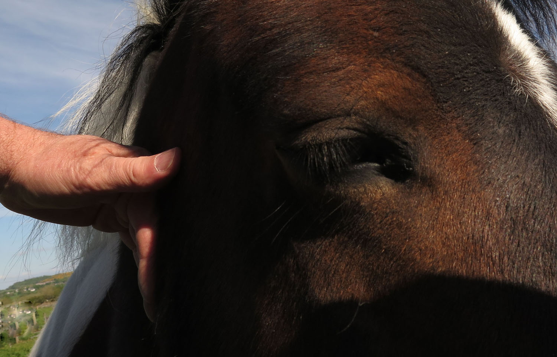 Ireland-Animals-Horse