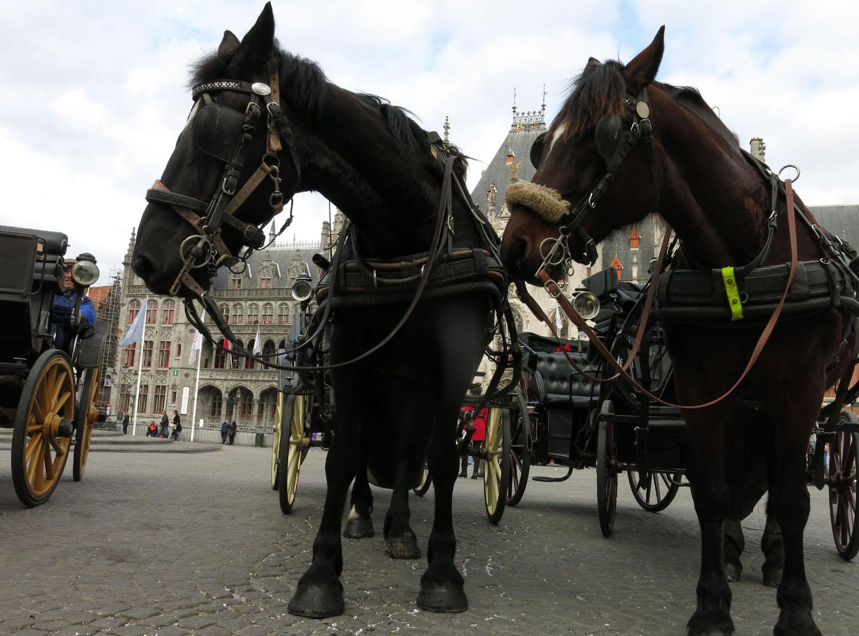 Belgium-Bruges-Horses
