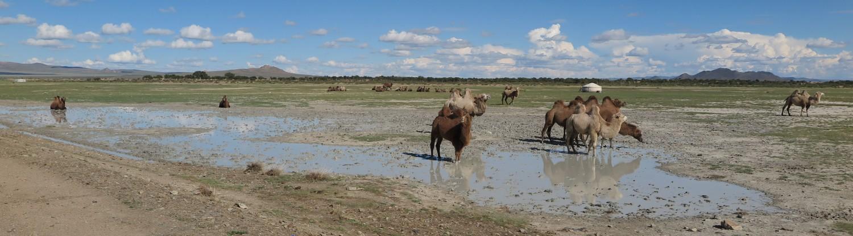 Mongolia-Karakorum-Camels