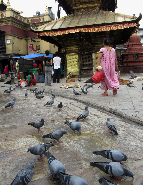Nepal-Kathmandu-Monkey-Temple-Pigeons