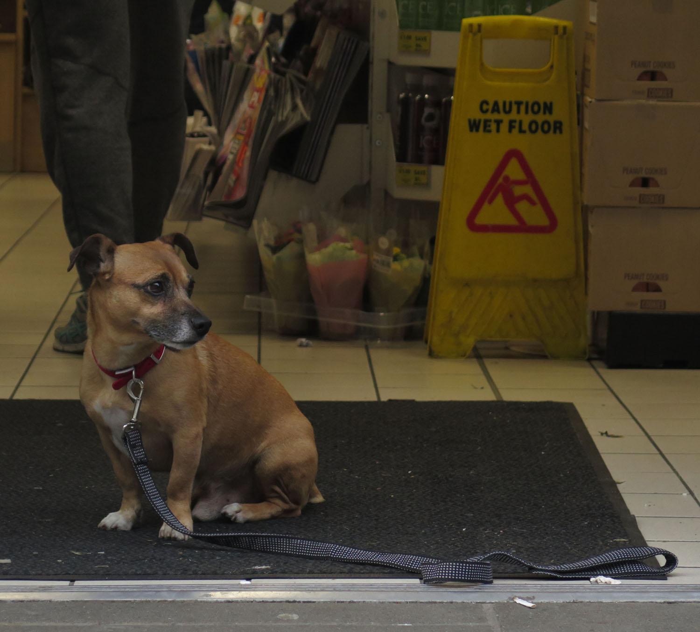 Ireland-Dublin-Street-Scenes-Doggie