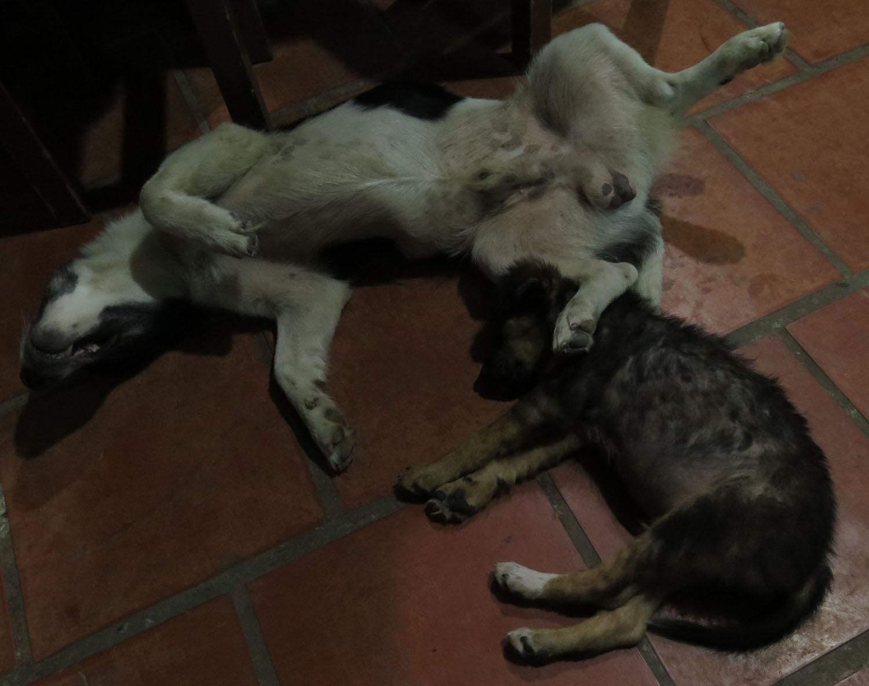Vietnam-Mekong-Delta-Doggies