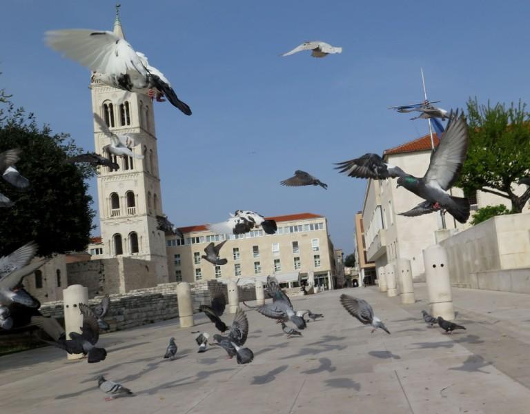 Croatia-Zadar-Street-Scenes-Pigeons