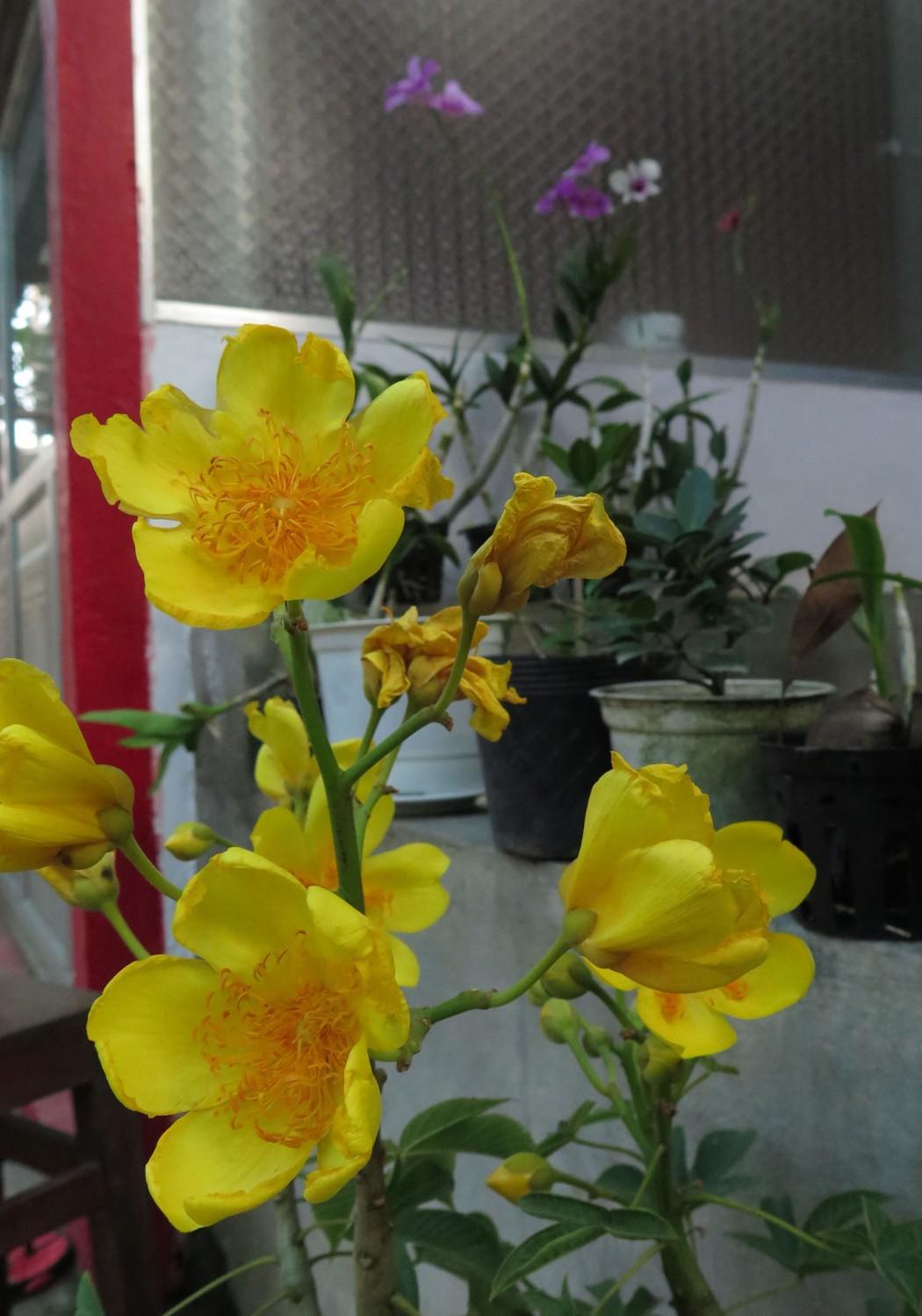 Vietnam-Mekong-Delta-Flowers