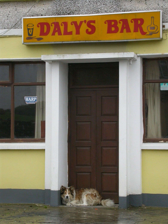 Ireland-Animals-Dog-Quilty-Dalys-Bar