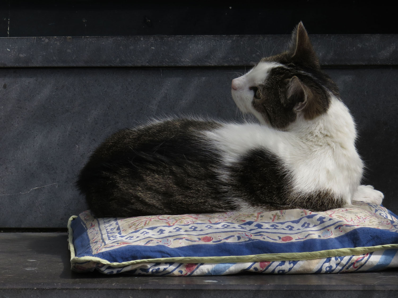 Netherlands-Amsterdam-Street-Scenes-Cat