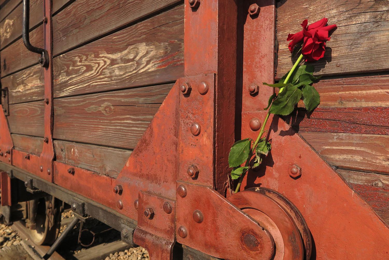 Poland-Auschwitz-Birkenau-Dividing-Platform-Rose