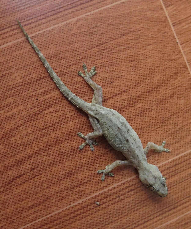 Vietnam-Mekong-Delta-Lizard