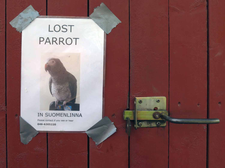 Finland-Helsinki-Lost-Parrot