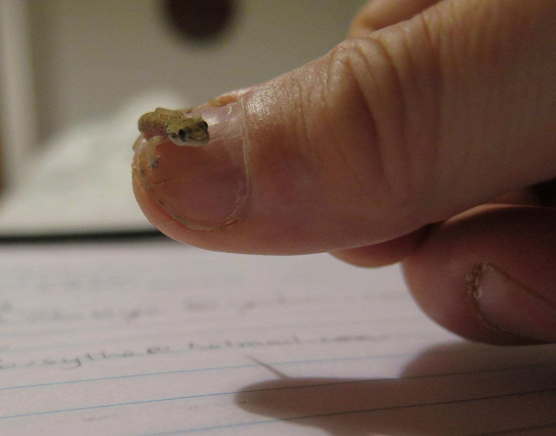 Ecuador-Galapagos-Fauna-Gecko