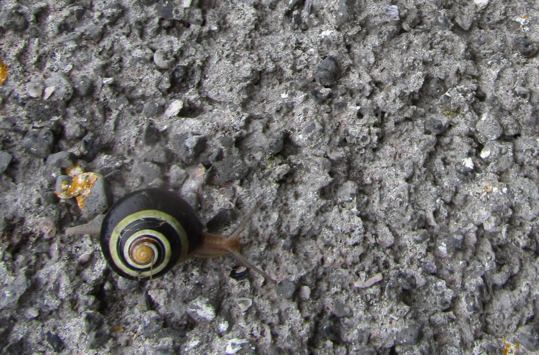 Ireland-Animals-Snail-Aran-Islands