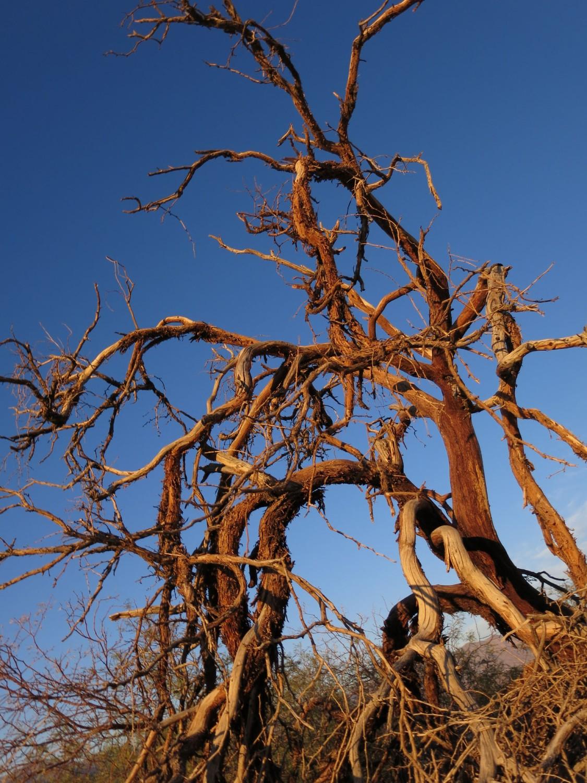 Death-Valley-Sunset-Tree