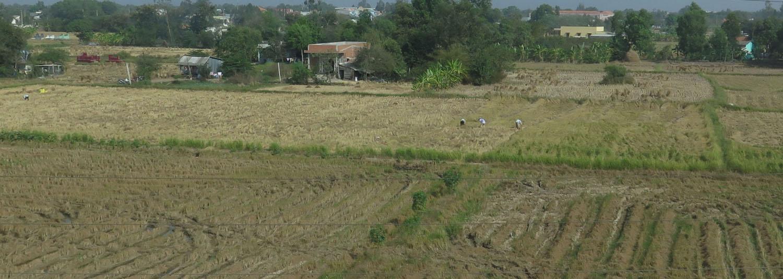 Vietnam-Mekong-Delta-Rice-Fields