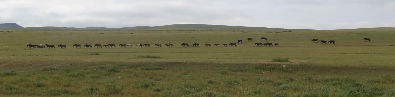 Mongolia-Karakorum-Horses