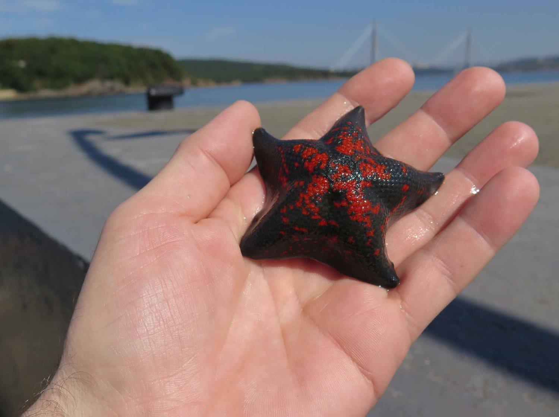 Russia-Trans-Siberian-Railway-Vladivostok-Starfish