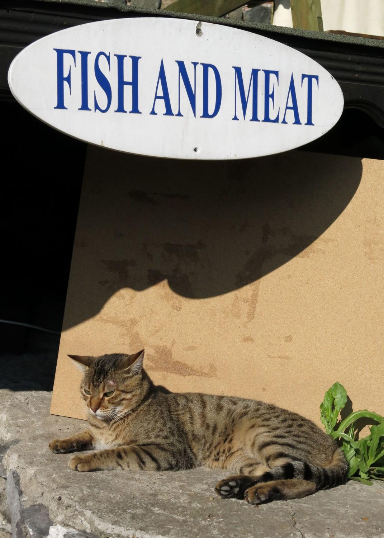 Turkey-Bosphorus-Cat