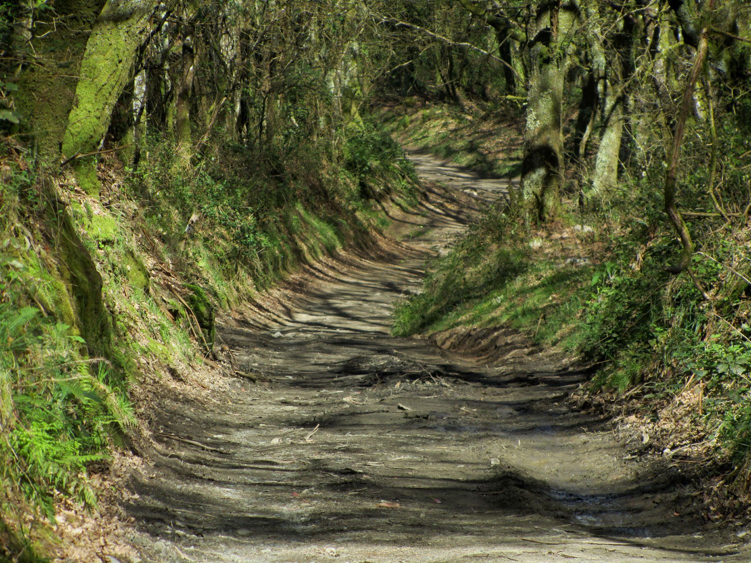 Camino-De-Santiago-Sights-And-Scenery-Forest