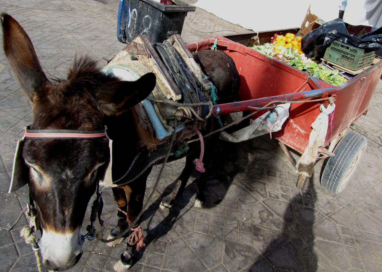Morocco-Marrakech-Donkey