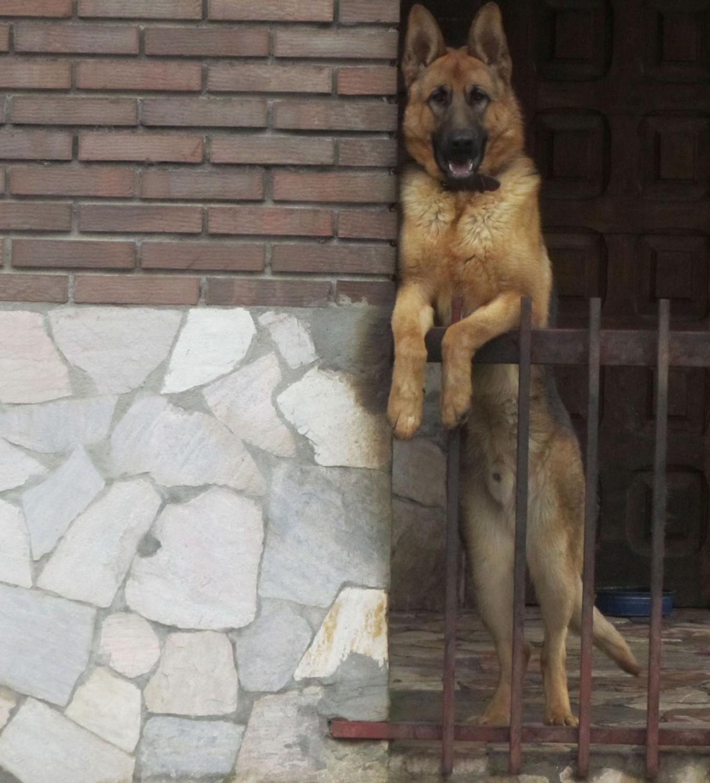 Camino-De-Santiago-Animals-Dogs